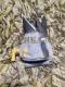 China - Муляжи, чучела, устройства и аксессуары, Муляж кормящаяся кряква самец